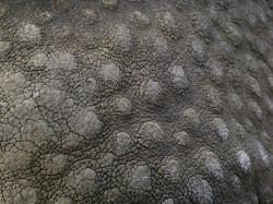 Leather Textures clipart rhino skin