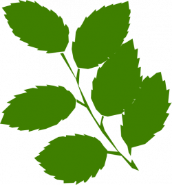 Mint clipart green leave