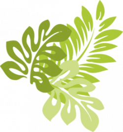 Leaves clipart hibiscus leaf
