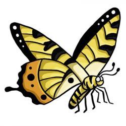 Legs clipart butterfly