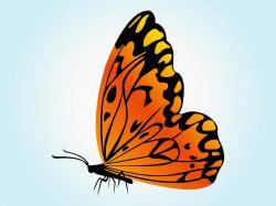 Papillon clipart orange butterfly