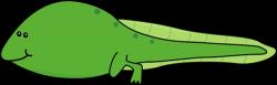Tadpole clipart frog tadpole