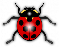 Legs clipart insect