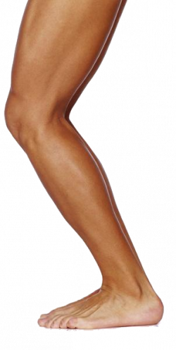 Legs clipart one