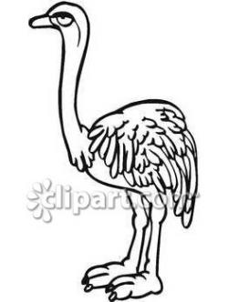 Ostrich clipart two