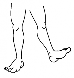 Legs clipart two