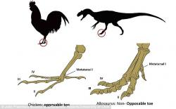 Legz clipart dinosaur