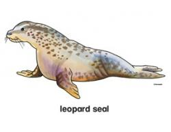 Leopard Seal clipart