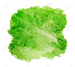 Lettuce clipart green salad