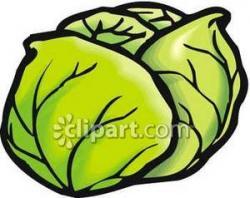 Lettuce clipart head lettuce