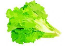 Lettuce clipart lettuce leaf