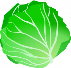 Cabbage clipart cartoon