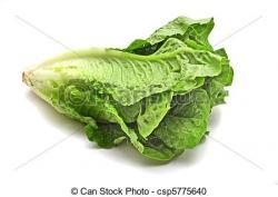 Lettuce clipart romaine lettuce
