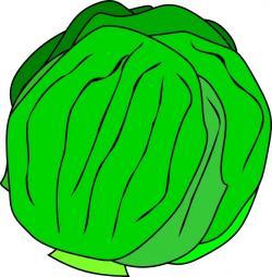 Lettuce clipart vector