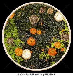 Lichen clipart Grasses Clipart