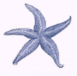 Navy clipart starfish