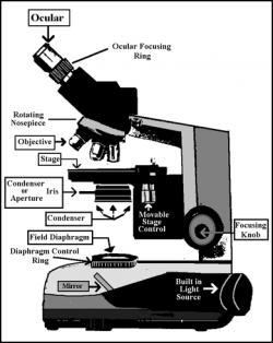 Light Microscopy clipart compound microscope