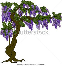 Lilac clipart lilac tree