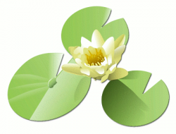 Daffodil clipart lily pad flower
