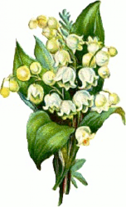 Lily Of The Valley clipart