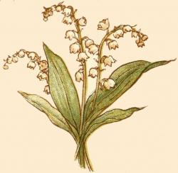 Lily Of The Valley clipart meaning