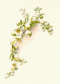 Lily Of The Valley clipart vintage