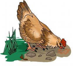 Chick clipart eating