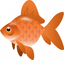 Salmon clipart transparent fish