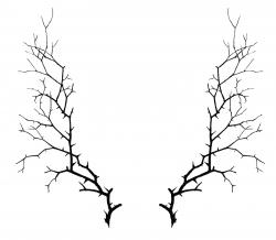Thorns clipart branch