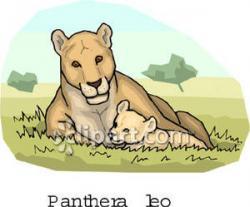 Lioness clipart cub