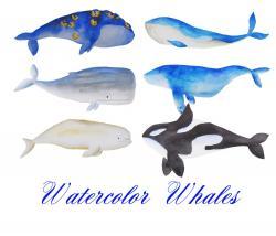 Orca clipart marine animal