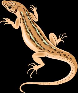 Goanna clipart house lizard
