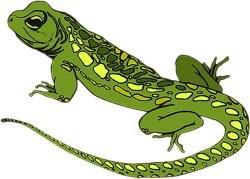 Iguana clipart yellow spotted