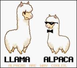 Alpaca clipart swag