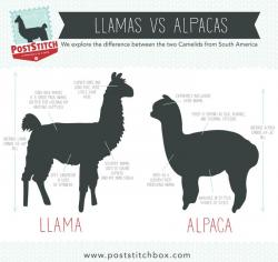 Alpaca clipart difference between
