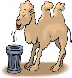 Camels clipart drinking water