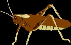 Cricket clipart locust