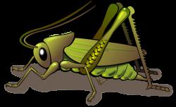 Locust clipart cricket