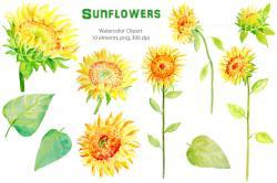 Marigold clipart watercolor