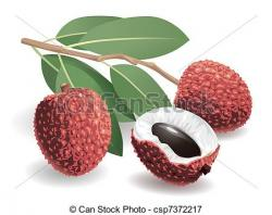 Lychee clipart lychee fruit