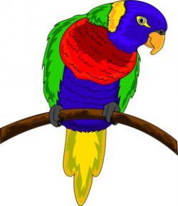 Budgerigar clipart colourful bird