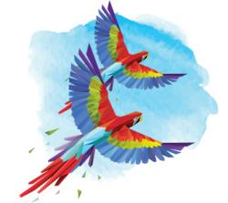 Macaw clipart costa rica