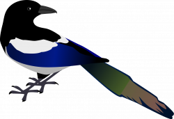 Wings clipart magpie