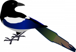 Magpie clipart cartoon