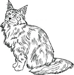 Maine Coon clipart main