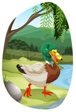 Mallard clipart
