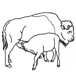 Pronghorn clipart Bison Clipart