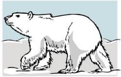 Polar  Bear clipart tundra animal