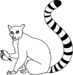 Lemur clipart black and white