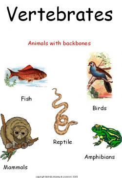 Animal Kingdom clipart vertebrate